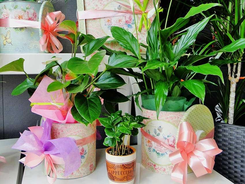 plantas-banner